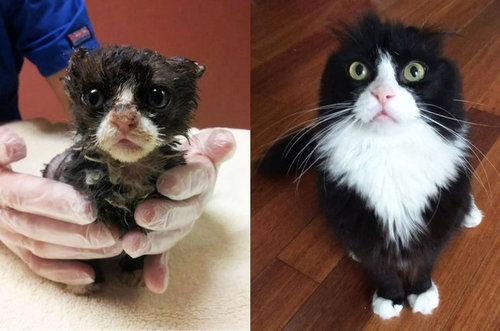 救助された猫17