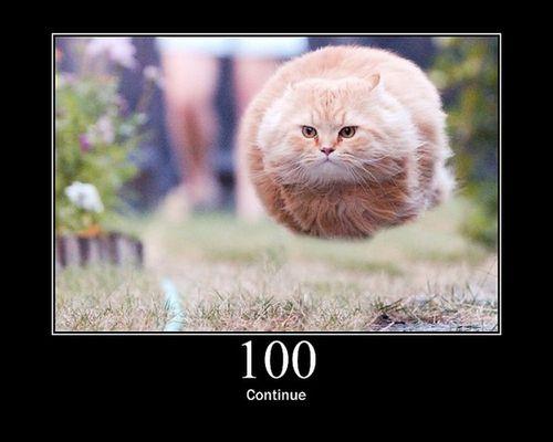 猫でHTTPステータスコード01