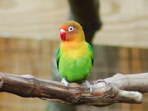 ゴシック・ファッションの鳥00