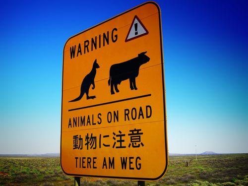 道路を渡る動物00