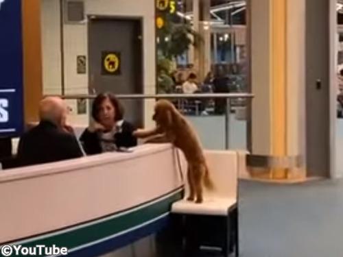 犬「ハグしてもらえませんか?」00