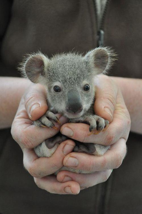 11Baby 赤ちゃん動物たち