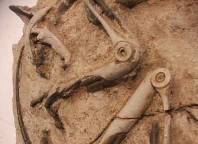 未来の化石06