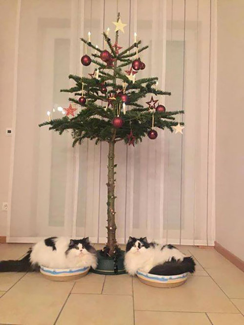 ペットからクリスマスツリーを守る戦い14