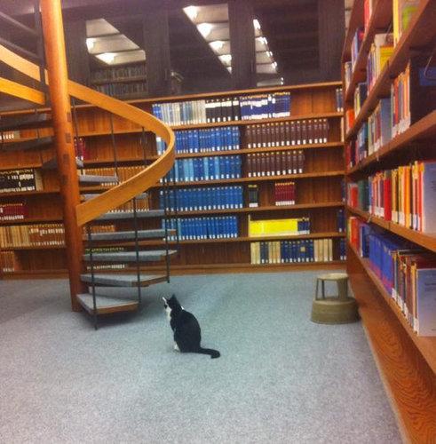 ドイツの大学で暮らす猫04