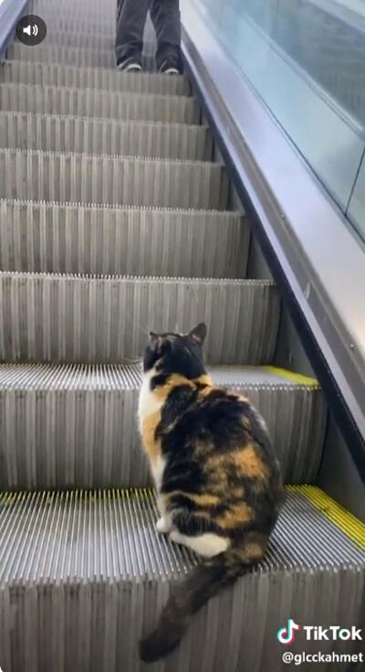 猫、エスカレーターを乗りこなす02