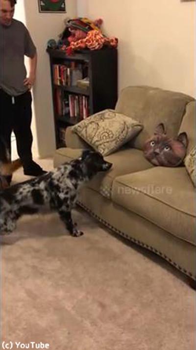 猫クッションを怖がる犬かわいい03
