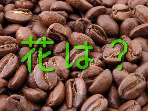 コーヒーの花00