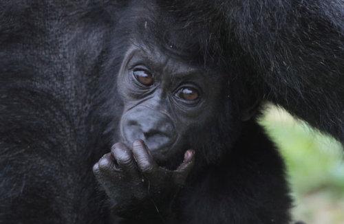 動物の赤ちゃん05