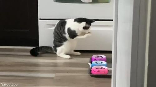 アライグマみたいにご飯を食べる猫03