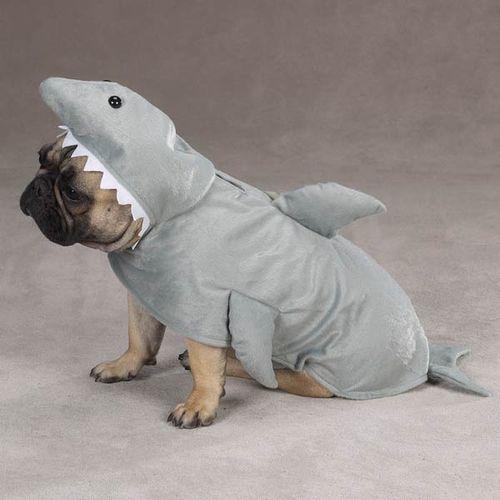 サメ猫12