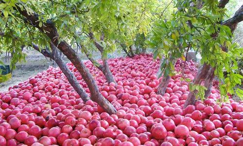 収穫前の食物05