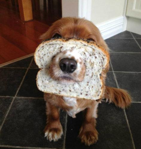 犬とパンの耳09