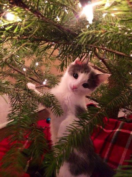 クリスマスとペット04