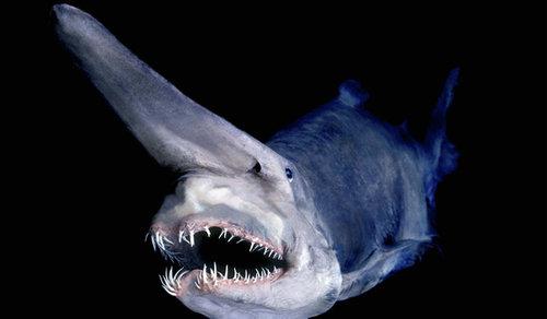 深海の生き物14