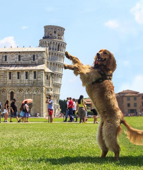 ピサの斜塔で犬の散歩01