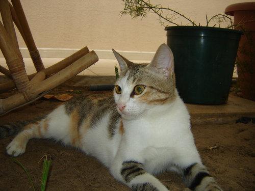 兄猫と妹猫02