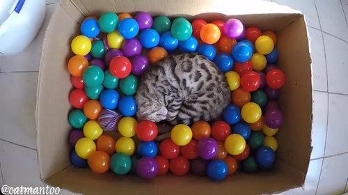 カラーボールと猫07