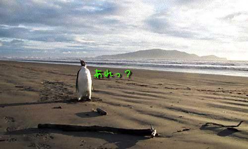 迷いペンギン