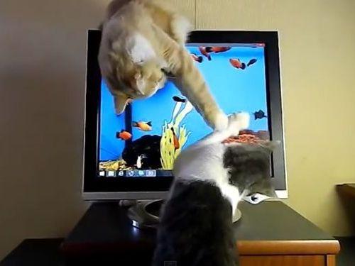 猫のモニタ画面・攻防戦02