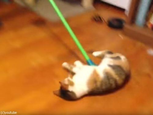 掃かれたい猫02