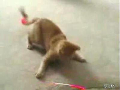 子猫のあまりの反応速度に驚愕してしまう映像