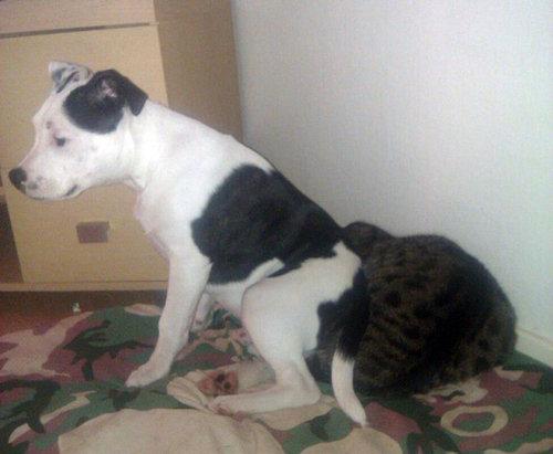 猫を屈服させる犬04