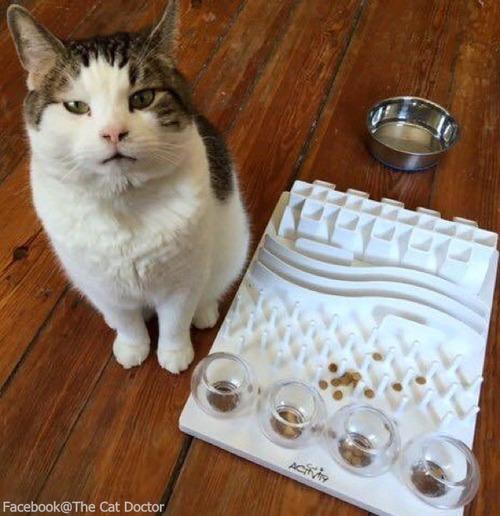 看護猫のスパーキー04