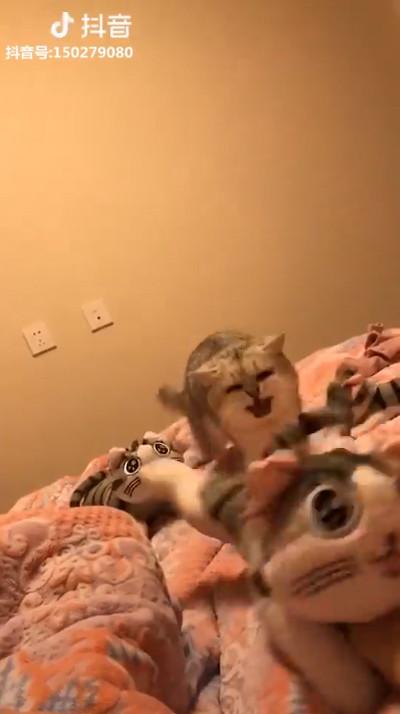 飼い主にぬいぐるみを触らせない猫02