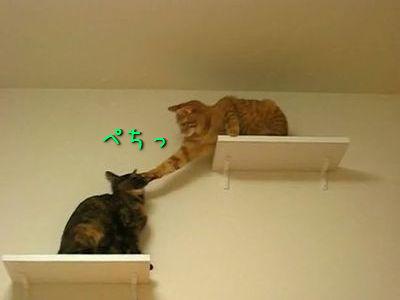 レーザーポインタと2匹の猫