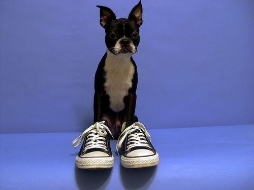 靴の中の犬04