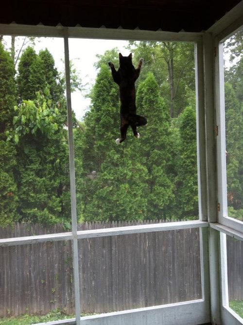 窓の外に鳥がいるときのうちの猫01