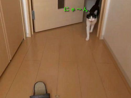 玄関開けたら2秒でにゃんこ