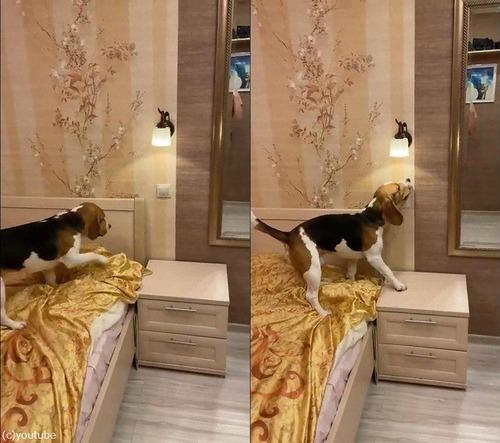 電気を消してくれる犬03