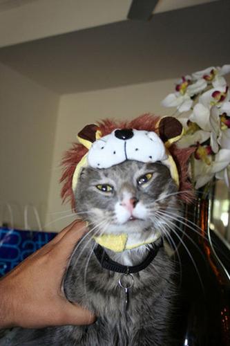 猫コスプレ06