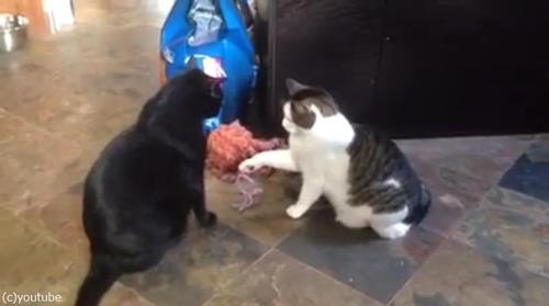 猫パンチしない猫02