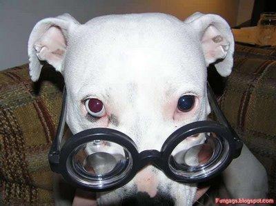 メガネ犬02