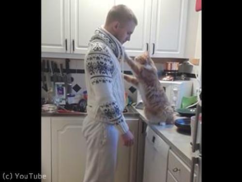 飼い主さんにべったり猫01