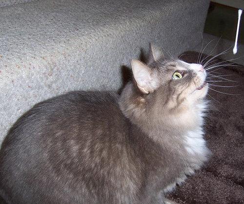 猫の綿棒キャッチ01