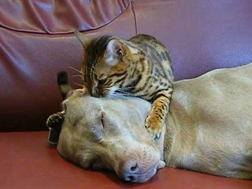 猫が犬の顔をもみもみ…眠りに誘う01