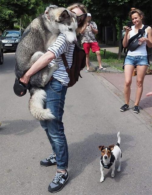 怖がりの犬04