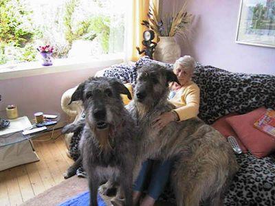 巨大な犬10