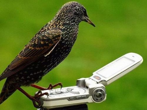 窓の外の鳥02