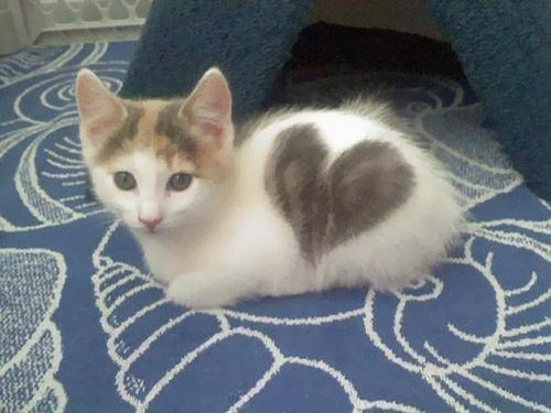 猫のハート04