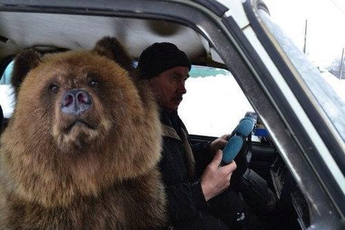 ロシアのクマ11