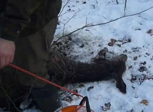 湖に落ちた鹿を救助04