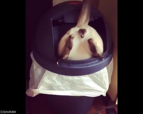 ゴミ箱にハマって出られなくなったドジっ子さん01