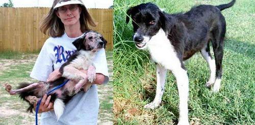 救助された犬や猫23
