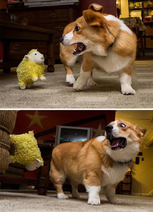 怖がりの犬02