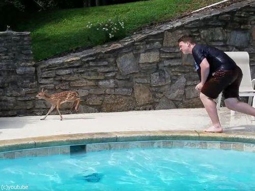 プールの奥に子鹿がいる06